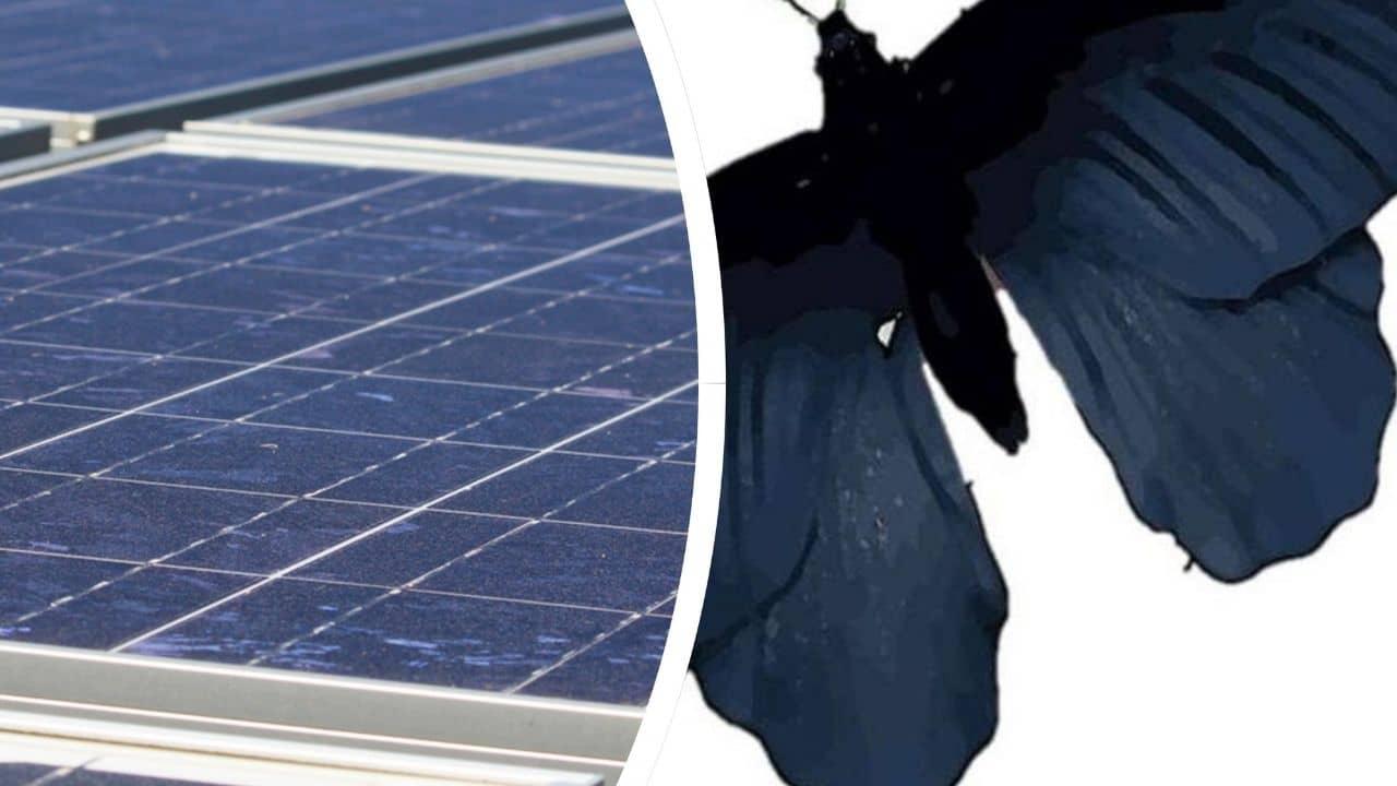 alas de mariposa en los paneles solares
